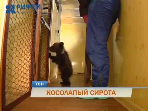 В Перми в гостинице для домашних животных поселился медвежонок