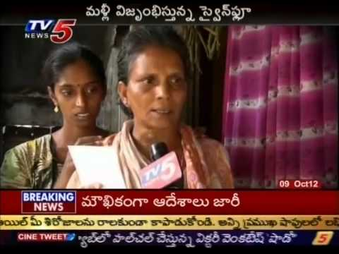 Swine Flew Terror in East Godavari District (TV5)