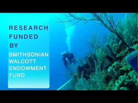 Acroporid Demographics: Threatened Coral Conservation