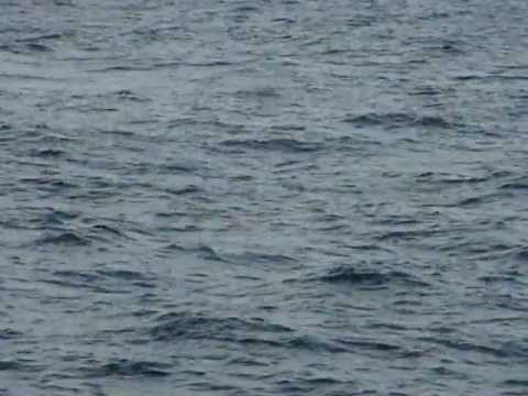 Weligama  Bay, Sri Lanka - Blue Whales (2) video