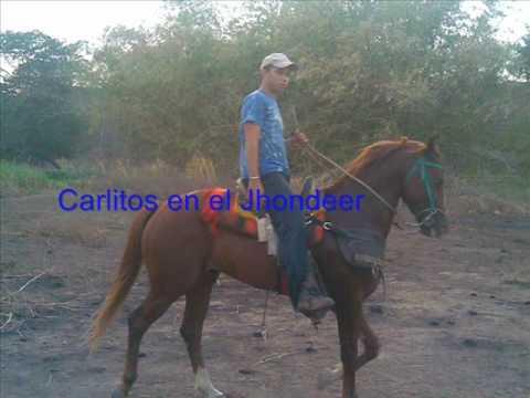 toros coleados panas del coleo de ciudad bolivar