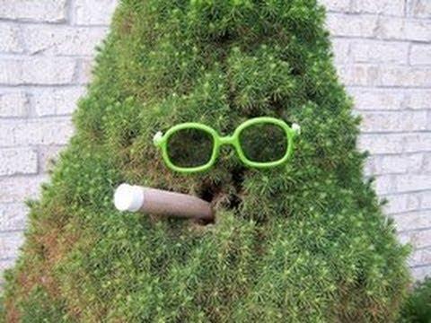 Heideroosjes - Bomen Zijn Relaxed