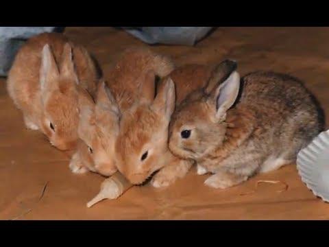 Animali teneri, cuccioli – The Sonia's factory part 1