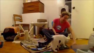 Funny dog & cat Planet video - Try Not To Laugh - battle with paper