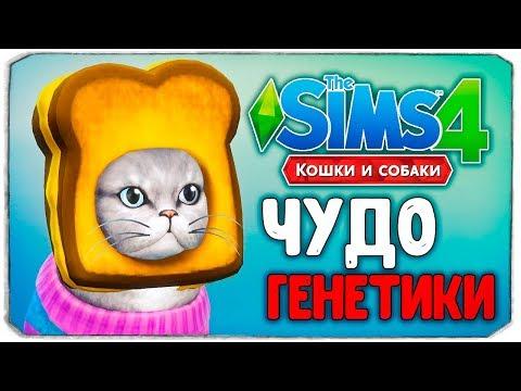 ЧУДО ГЕНЕТИКИ, КОШКИ - The Sims 4 Кошки и Собаки