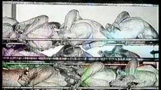 Alte Werbung DDR Broiler Geflügel Hähnchen 50er 60er Jahre