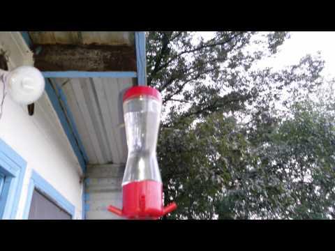 Hummingbirds Migration 2015 Hummingbird Migration South