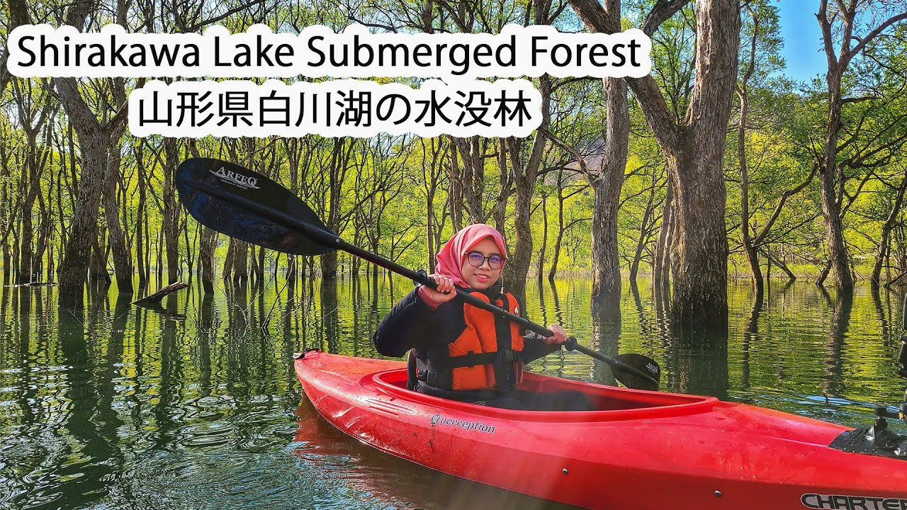 Canoeing Above the Bridge !!! The Beauty of The Sunken Forest in Yamagata Prefecture
