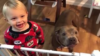 FUNNY DOG FAILS | Funniest Dog Videos