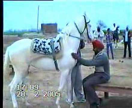 A SPECIAL HORSE GATE OF MARWARI HORSE