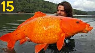 15 BIGGEST FISH Ever Seen