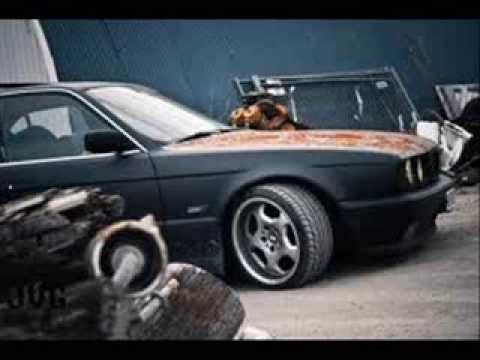 272 Area - BMW (272 Area–садись сука в БМВ )