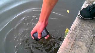 Motorola Defy with Music in the Water