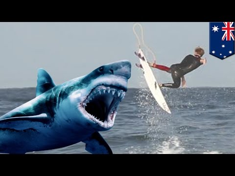 Shark attack: Shark bites chunk out of Australian pro surfer Brett Connellan's leg - TomoNews