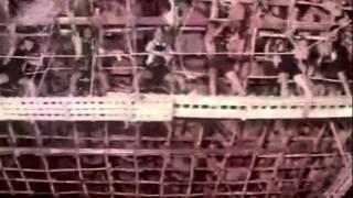Classic Melody Poove Unnai Nesithen - Paruvaragam - Hamshalekha - SPB - Janaki.mp4