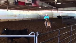 Mango- Jared Lesh Cowhorses