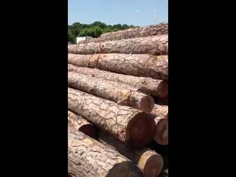 Syp Pine video
