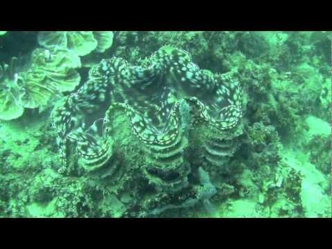 Tunku Abdul Rahman Marine Park - Sabah, Borneo, Malaysia