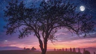 Deep Sleep ♡ Beautiful Nature, Healing Calm Relaxation, Heavenly Peace, Natural Calm ★ 37