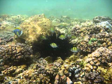 Sri Lanka,ශ්රී ලංකා,Ceylon,Coral Reef (25)