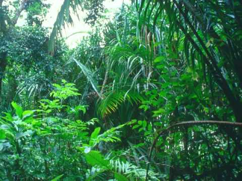 Tropical Rainforest - Sounds of Nature ASMR