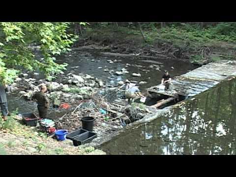 Ratowanie pstrągów (rzeka Biała w Bielsku-Białej)
