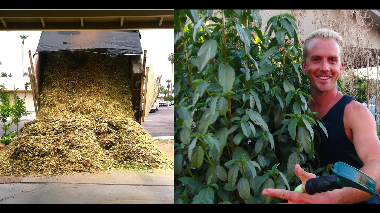 Wood Chip Uses ~ Amazing edible garden trees using wood chips youtube