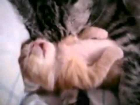 Funny video of cat , video drole un chat qui fait un cauchemar  lol cat dream lol.