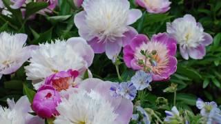 jardines encanto