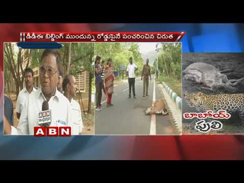 Cheetah Wandering in Sri Venkateshwara University | cheetah charged on Cows
