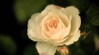 Watch Tony Bennett Little Things video