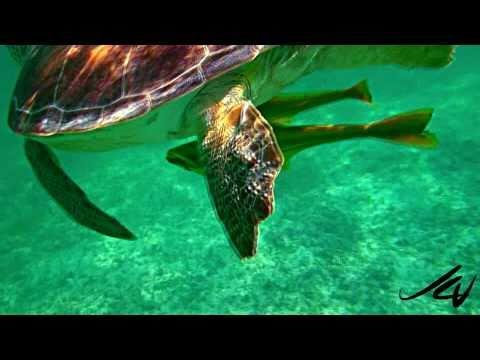 Akumal Bay Snorkeling Tour   Mayan Riviera