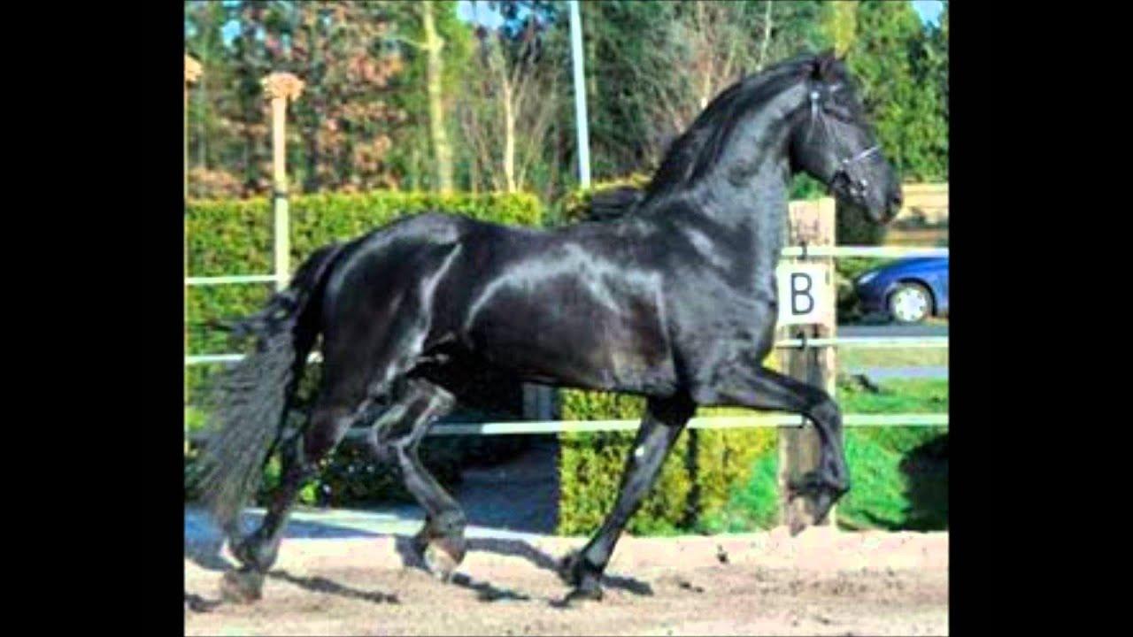 top 10 des chevaux les plus beau du monde youtube. Black Bedroom Furniture Sets. Home Design Ideas