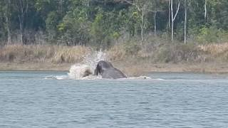 ช้างป่าชนกัน ในอ่างเก็บน้ำสายสร อุทยานแห่งชาติเขาใหญ่