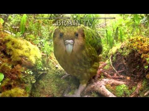 ТОП 5 Редких и удивительных животных с неземной внешностью .От BRAIN TV.