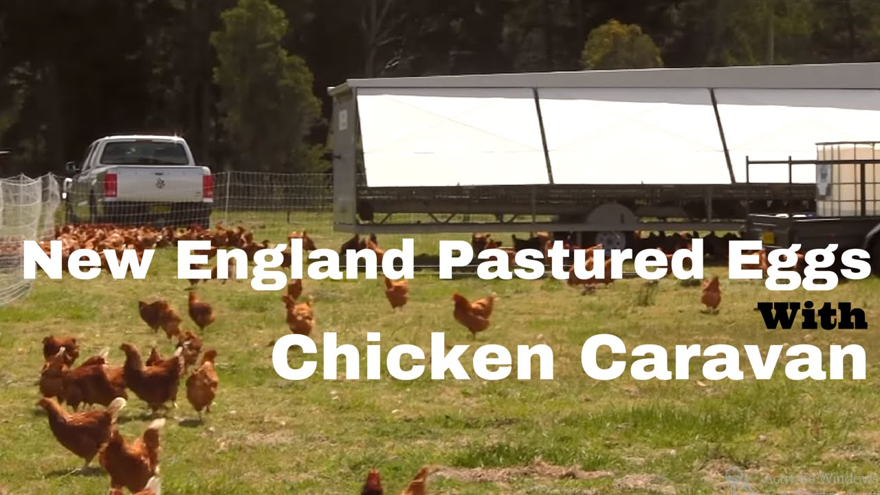 New England Pastured Eggs With A Chicken Caravan Youtube