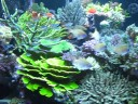 Fantastically Diverse Reef Aquarium at Greenwich Aquaria