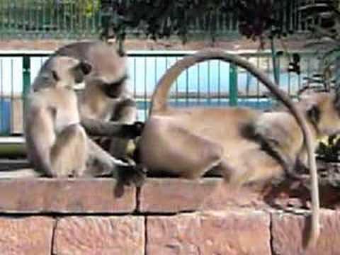 Butt monkey skank anal