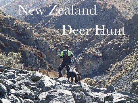 Red Deer Hunt South Island New Zealand