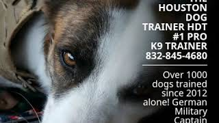 THE HOUSTON DOG TRAINER HDT  #1 PRO K9 TRAINER 832-845-4680