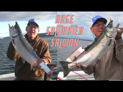Puget sound king salmon fishing how to save money and do for Salmon fishing puget sound