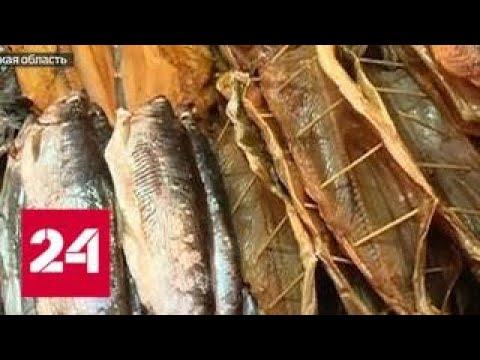 Секрет рыбной мафии: почему невозможно победить браконьерство - Россия 24