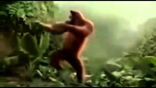 Un vidéo qui fait rire