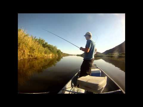 Gila river for Gila river fishing