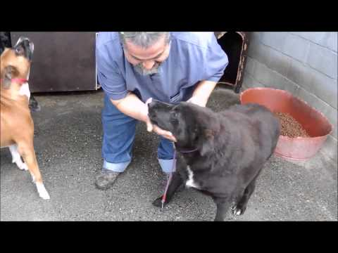 Animalinneed: Video of Onida