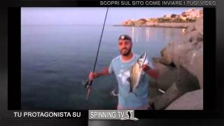 Spigola a spinning: pesca all