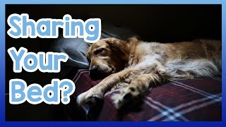 Should You Let Your Dog Sleep with You? Pro's and Con's of Sleeping in the Same Bed as Your Dog!