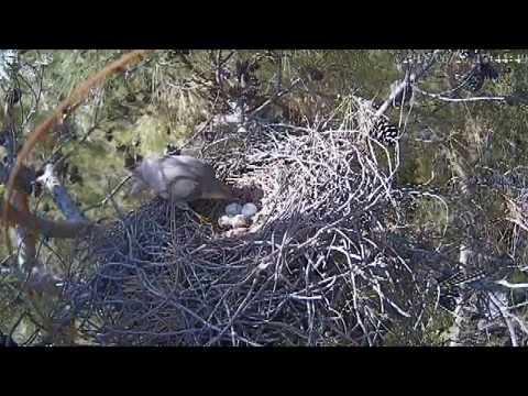 Yuvaya Son Geliş - Last Visit to Nest