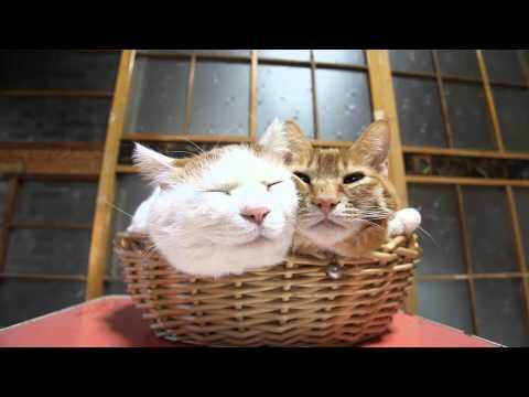 籠の中で寝ている2匹の猫...
