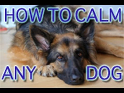 Dog Training Tutorial: Greeting Visitors Calmly! video